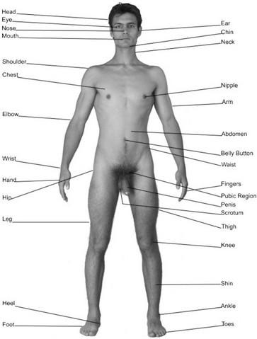 Something is. men naked massage fetish